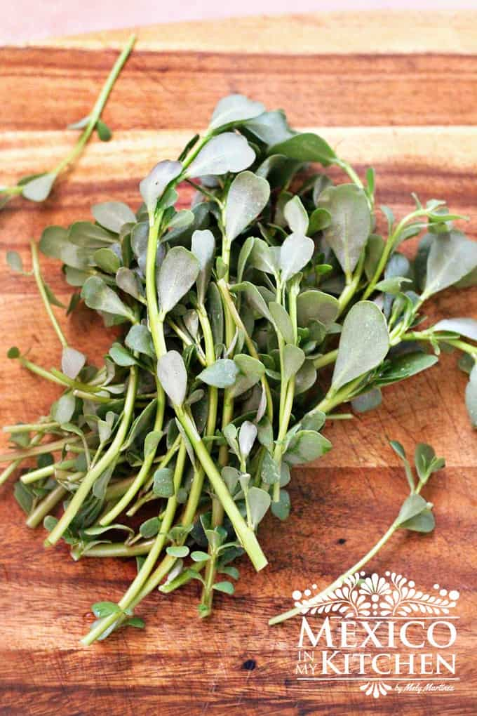 Purslane herb Verdolagas | Mexico in my kitchen